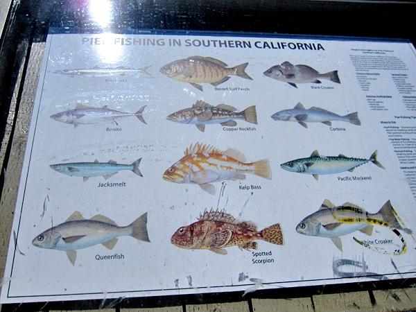 Välsorterat fiskutbud i Newport