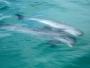 Om man tog på sig sin bästa monokel kunde man klart och tydligt se två delfiner simma runt, och inte så mycket mer.