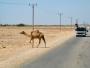 Den här krabaten ertappades vid vägkanten i ett tappert försök att lifta till stan.