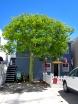 Hur skönt är grönt om man lyckas få trädstammen i samma kulör som löven? Illegala växtsteroider är solkart inblandade.