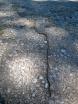 Det här sker bara på Gotland sägs det. Troligen formar larverna en ormliknade formation för att lura fiskmåsarna på hög höjd se i syne. När måsen ser den livsfarliga ormen vågar den inte anfalla.