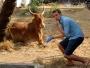 Passerar en ko(?) som inte tycks vara insmord i skolkräm och så får det inte gå till. Den riskerar både brännskador och för tidig föråldring. Smyger mig fram långsamt och obemärkt.